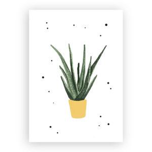 Wenskaart planten aloe vera